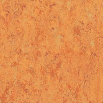 amber-th_1871636_001.jpg