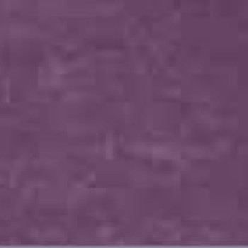begonia-742.jpg