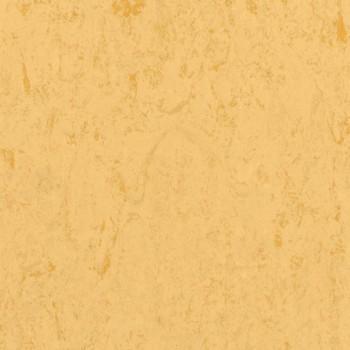 corn-th_1871612_001.jpg